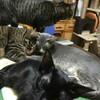 飼い猫に餌をあげると死ぬ!?病気を防ぐ正しいご飯のあげ方