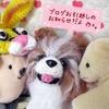 愛犬ブログのお知らせ
