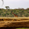 川沿いで朝ご飯を食べていたら、野生のキリンが歩いて行くとか@アフリカ サンブル保護区