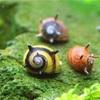 サザエ石巻貝の飼育方法!イガイガが特徴のかわいいおすすめ苔取り貝