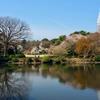 新宿御苑 上の池(東京都新宿)