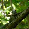 生き物散歩 ゴールデンウィークの森の生き物2018