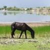 水位が最低のクルックドツリー野生生物保護区