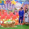 佐藤 健さんライオン犬 福士蒼汰さん子犬『坂上どうぶつ王国』