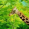 11月24日は「進化の日」~キリンさんは何故首が長いのか?~