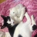 保護した猫達とのんびり生活日記