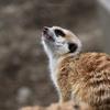 高知県立のいち動物公園(3)『かわいいコたち』