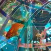 香川県宇多津町のアクアでオシャレなスポット旅:四国水族館&ゴールドタワー&アイリーカフェ