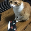 招き猫発祥の地~浅草今戸神社~参拝記