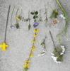 春の花、集めてみました