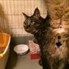 【猫を飼おうか迷っている人へ】猫を飼うのに必要なもの・お金・条件について