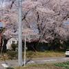 桃ノ木川の桜並木