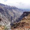 ペルーの旅⑤動物 アンデスのコンドル