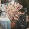 寒桜が届けてくれた春