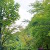 【第4回ソロキャンプ】初の夏キャン、樽尾沢キャンプ場で一晩過ごして来た