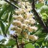 初夏の樹木の花