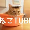 ネコTUBE|癒やしネコに囲まれた 全天球360度動画 №.02 他♪
