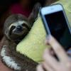 「動物との自撮り」はどんな場合に問題になるのか?