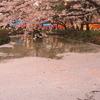 NO.2高田公園の花筏