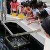 浜名湖「ウォット」でウナギのエサやり体験  親子20人が参加し楽しむ