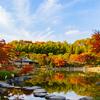 国営昭和記念公園に紅葉を見に行ってきた!写真まとめ