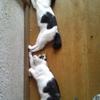 愛猫ミィ1ヶ月