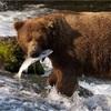 我々人類はいつまで熊に勝っただ負けただのを繰り返すのだろうか