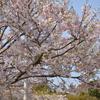 富士山と桜とわたし
