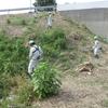 草刈り奉仕活動