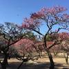 庭師とめぐる、庭めぐり~日本一広大な日本庭園「栗林公園」前編~