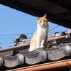 五ツ星お米マイスター 小江戸市場カネヒロお米の専門店です。#川越 #埼玉 #五ツ星お米マイスター #河越米 #米屋 #日本一幸せなお米