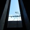2011/11/29 窓の外に「新雪」