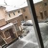 雪の日曜日⛄🌸