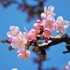 今日の景色 02/18 桜