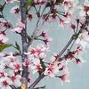 庭に桜を植えてはいけない理由