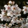 安曇野の春(=^・^=)