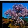 「Photoshop Express」のフィルター「自然」カテゴリを試す。納戸料の百年桜で。