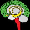 脳が停止したときにどうするか