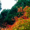 冠岳へ紅葉を見に行ってきました