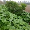 4種類の山菜が採れました