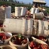 Bundabergでのファームジョブ(3月):歩合制 Eggplant(ナス)&Capsicum(パプリカ)は歩合のシステムが意味不明だった