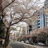 術後、初めて自転車に乗りました&3月25日の開花情報(靖国通り・千鳥ヶ淵・外濠公園)