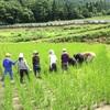 お米を育てる意味