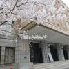 東京の穴場桜スポット!霞ヶ関の文化庁、財務省へお花見に出没!