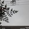 作曲工房 朝の天気 2018-11-29(木)どんよりとした曇り