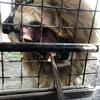 サファリパークデビュー!ライオンに餌あげました。