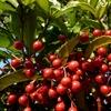 赤い実のなる木 2013