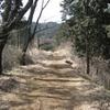 勝俣部長の健康体質作り・・・・高尾山「健康を体感する」(163)