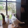 ススキと猫。