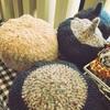 宮崎市雑貨屋コレット~作家さんの新作登場!アクセサリー、ハーバリウム、布小物、ニット帽まで!